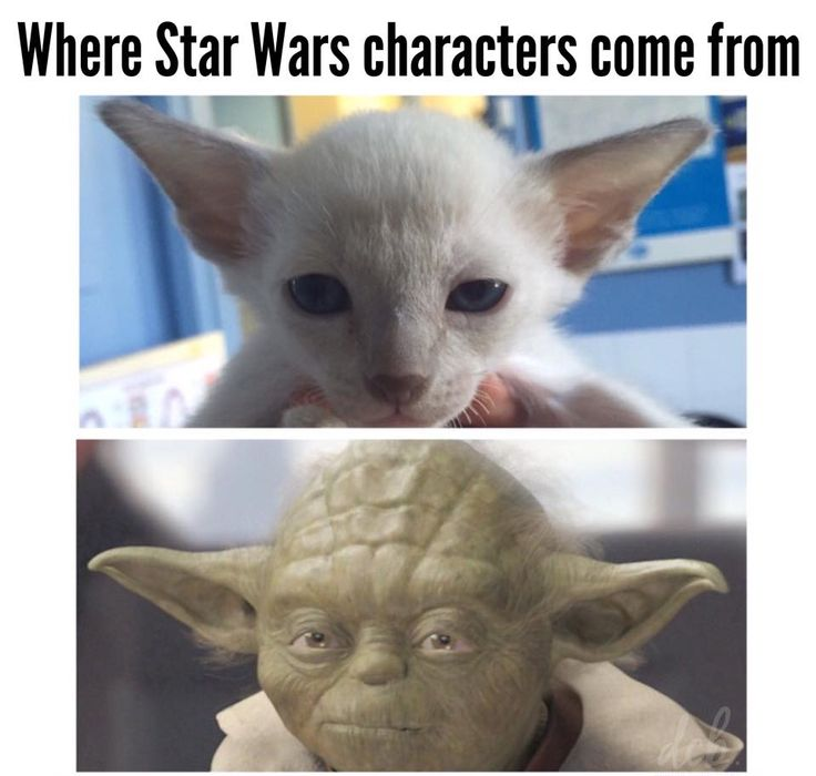 Where Star Wars characters come from. Dr. Chris Brown https://www.facebook.com/dcbpets