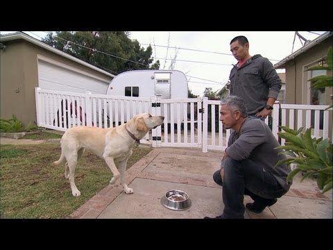 Dog Whisperer With Cesar Millan Cesar S Worst Bite