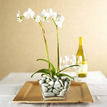 Beautiful Phalaenopsis orchid, aka Moth orchid, is a wonderful houseplant - simple, elegant, and surprisingly easy to grow!