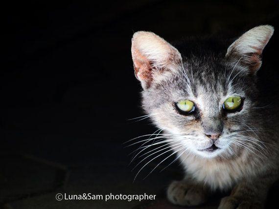 Fotografia a colori orizzontale occhi di gatto muso di LunaandSam