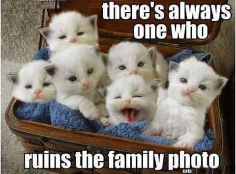 Pin for Later: Need a Laugh? These Animal Memes Should Do the Trick!
