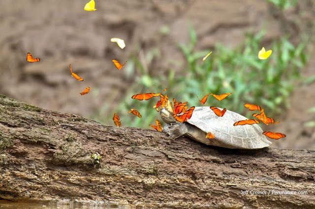 Teknősök könnyével oltják szomjukat - Pólus Online