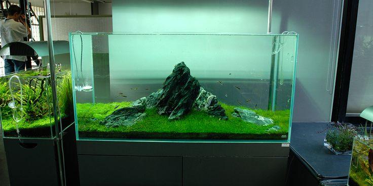 ... adana #aquascape Garden Bonsai Aquascape Plants Pinterest