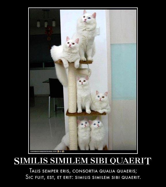 Similis Similem Sibi Quaerit  Talis semper eris, consortia qualia quaeris;  Sic fuit, est, et erit: similis similem sibi quaerit.