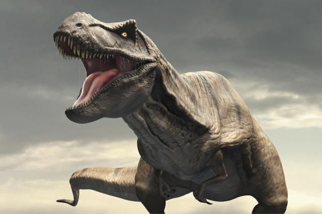 Your One-Stop Resource for T. Rex Information: Tyrannosaurus Rex dinosaur commonly abbreviated to T.rex.