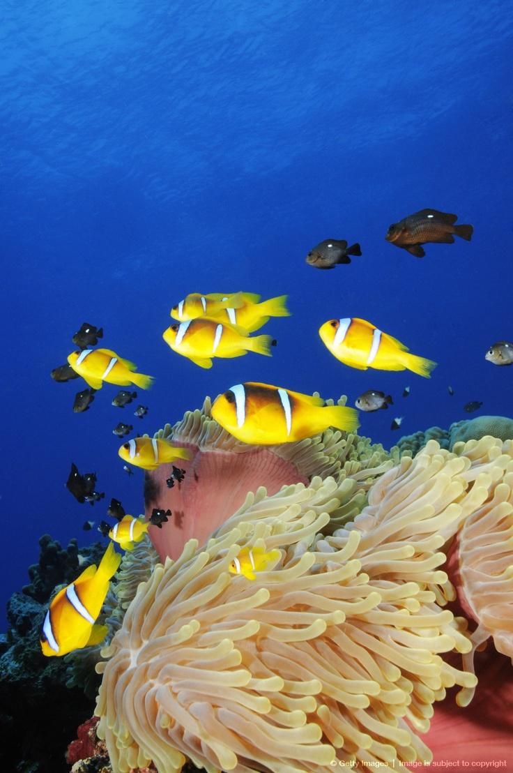 1367 best aquariums saltwater fish tanks and various sea life
