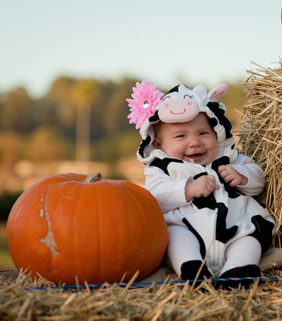 adorable baby cow costumes for halloween - Baby Cow Costume Halloween