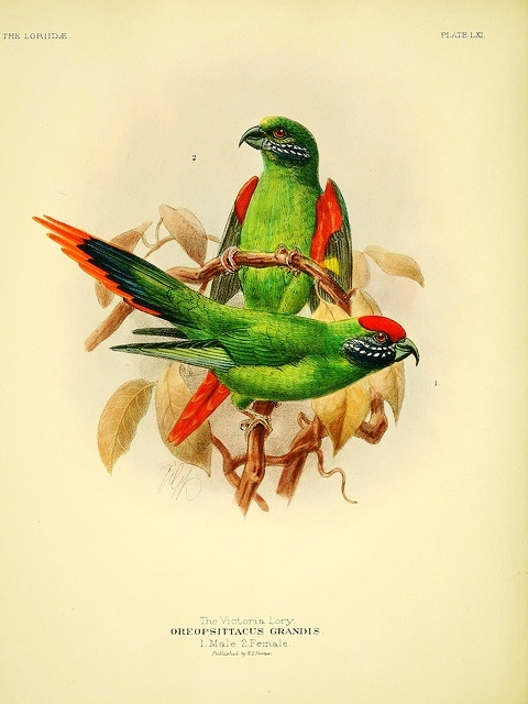 A monograph of the lories, or brush-tongued parrots, 1896.