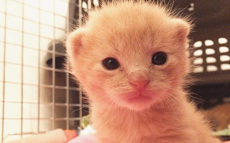 Newborn Kittens How To Care For Them With Images Newborn Kittens Baby Kittens Mama Cat