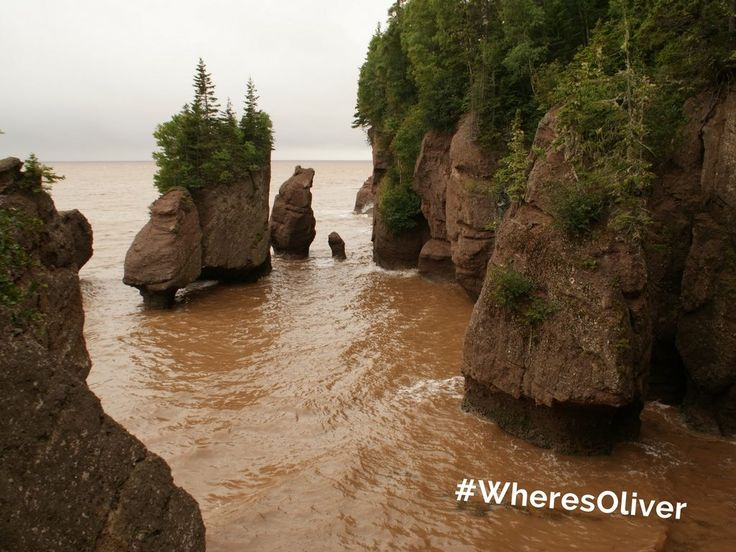 """The Hopewell Rocks that dot the shores of the Bay of Fundy near Moncton, NB, are also called 'Flowerpot Rocks' because of their """"unusual shape of the formations and the tenacious trees that cling to their tops."""" Oliver wants to find out what else can grow here! Find out more at: thehopewellrocks.ca"""