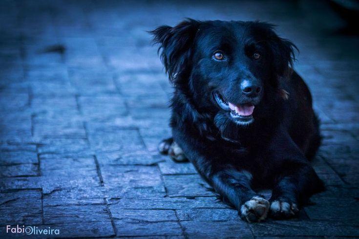 O amigo da fotografia noturna by Fabio Oliveira
