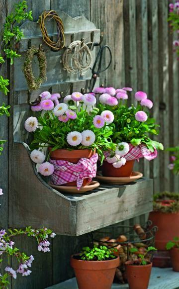 Die beliebten Maßliebchen (Bellis) bieten sich das ganze Frühjahr über für immer neue Frühlingsdekorationen an, in denen die kleinen Dauerblüher mal als Solisten, mal in charmanter Begleitung bezaubern.