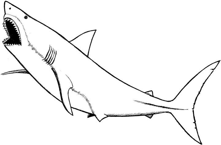 great white shark coloring pages online | prev next Baby Great White Shark Coloring Pages | Bedroom ...