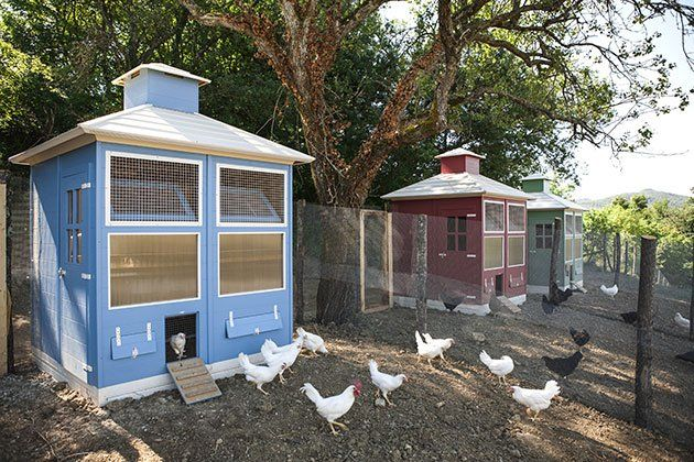 """The """"5 star"""" chicken coops"""