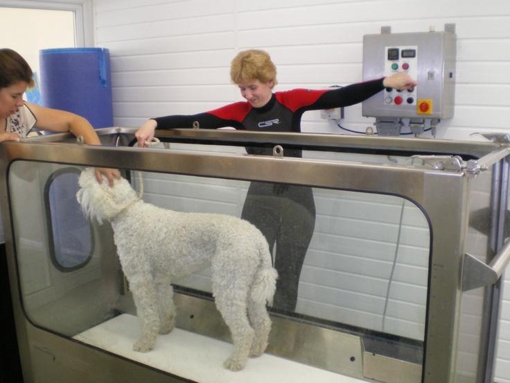 Dog Water Treadmill For Sale Australia