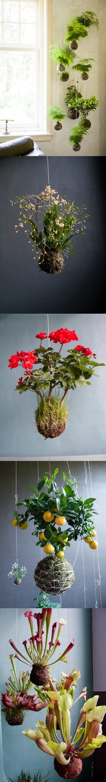 kokedama — Japanese moss string balls adapted to other plants. SOO COOL!