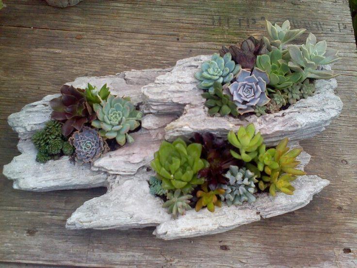 Succulents / Malones Nursery Charlotte NC