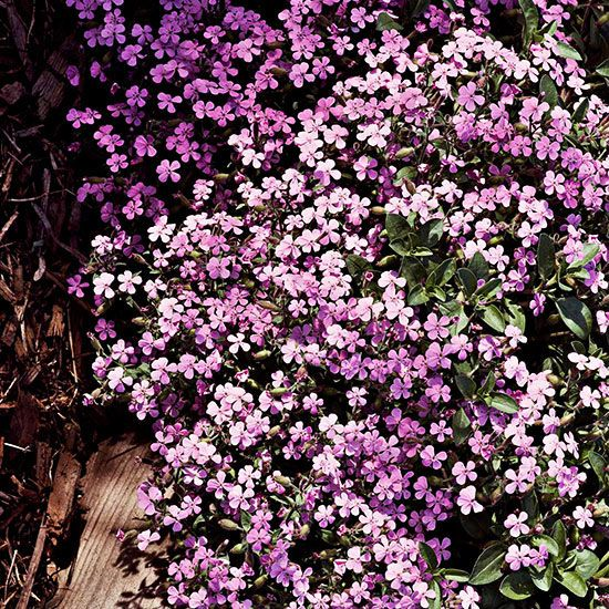 Low maintenance perennials for the northeast perennials for Low maintenance fall flowers