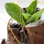 Pastelitos de chocolate con el centro relleno de chocolate derretido de mi amiga Mari, deliciosos!