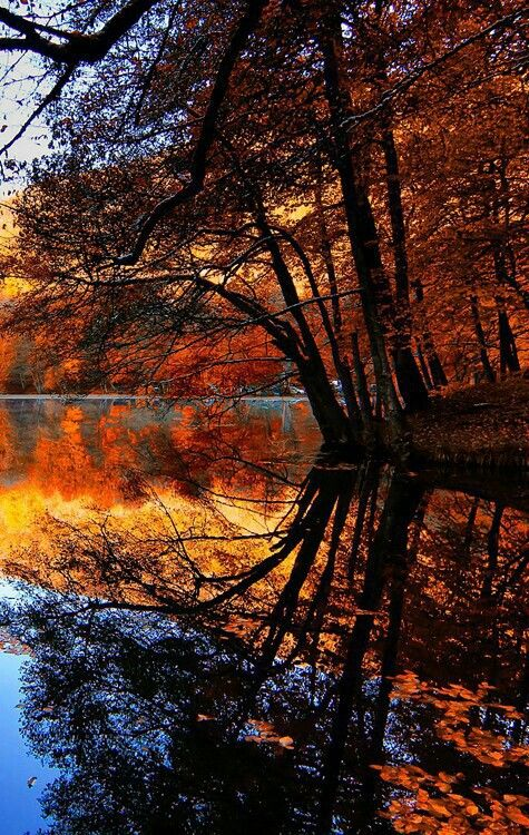 Lovely fall colors