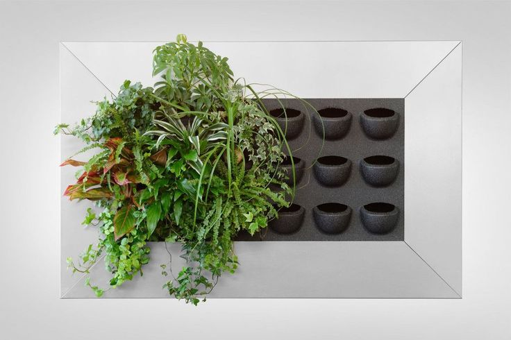 Vertical Wall Garden, Living Wall Systems & Planters | Suite Plants