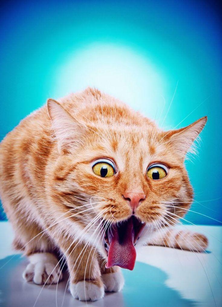 Best Cat Food For Sensitive Stomach Vomiting Katzen