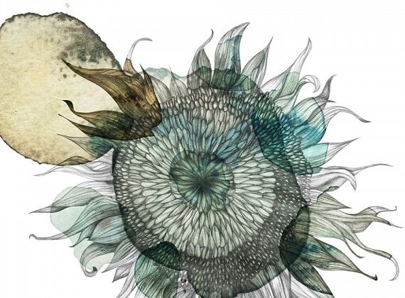 Karin Meyn | Sun flower illustration