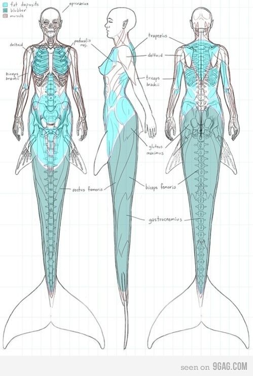 Anatomy Of A Mermaid  see @Marissa Hereso Hereso Hereso Hereso Hereso Hereso Reyes and @Cristina Gonzalez !!! they are real!!!