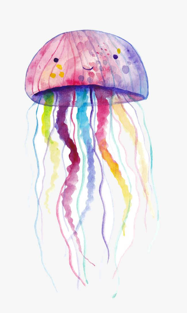 Watercolor Style Vector Illustration Jellyfish Jellyfish Clipart Watercolor Vector Vector Png Transparent Clipart Image And Psd File For Free Download Jellyfish Illustration Jellyfish Drawing Jellyfish Painting