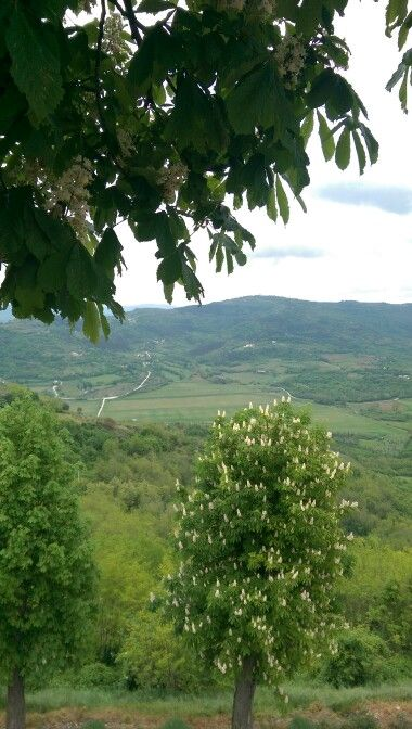 En route avec .. www.slovenia-private-tours.com