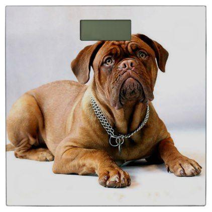 dogue de bordeaux puppy feeding guide