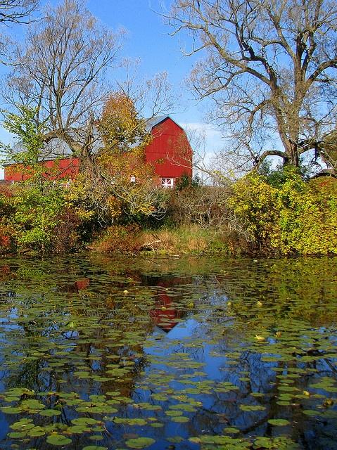 farm pond: aaaaahhhh, makes me breathe deeper just looking at it.