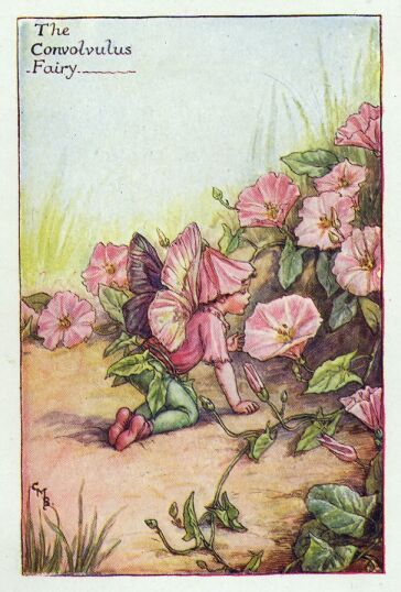 By Cicely Mary Barker                                                       …