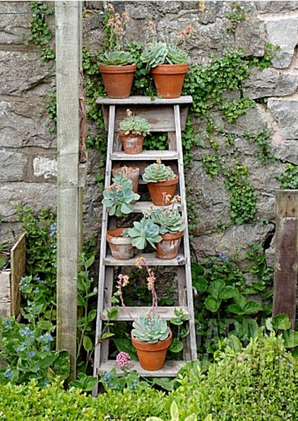 Ladder with succulents..to do in sunroom on south side of house