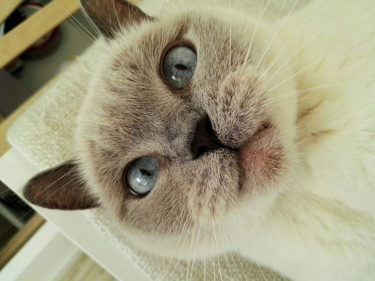 Lol this is funny face. #funny #cat