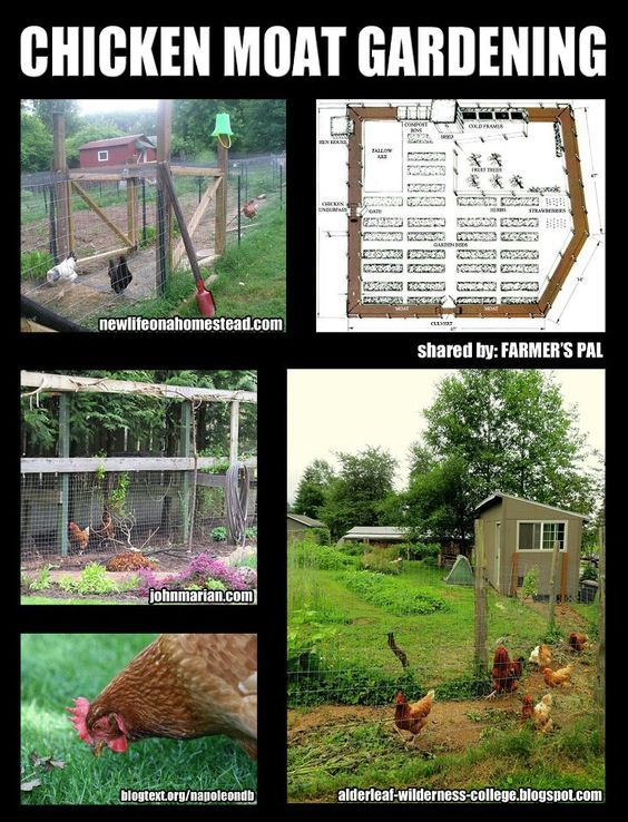 Chicken moat around veggie garden. Pest and weed control, deters deer and predators. I am so doing this on our property.