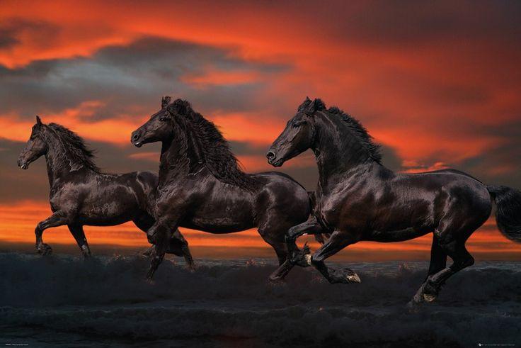 Zwarte Paarden - Bob Langrish
