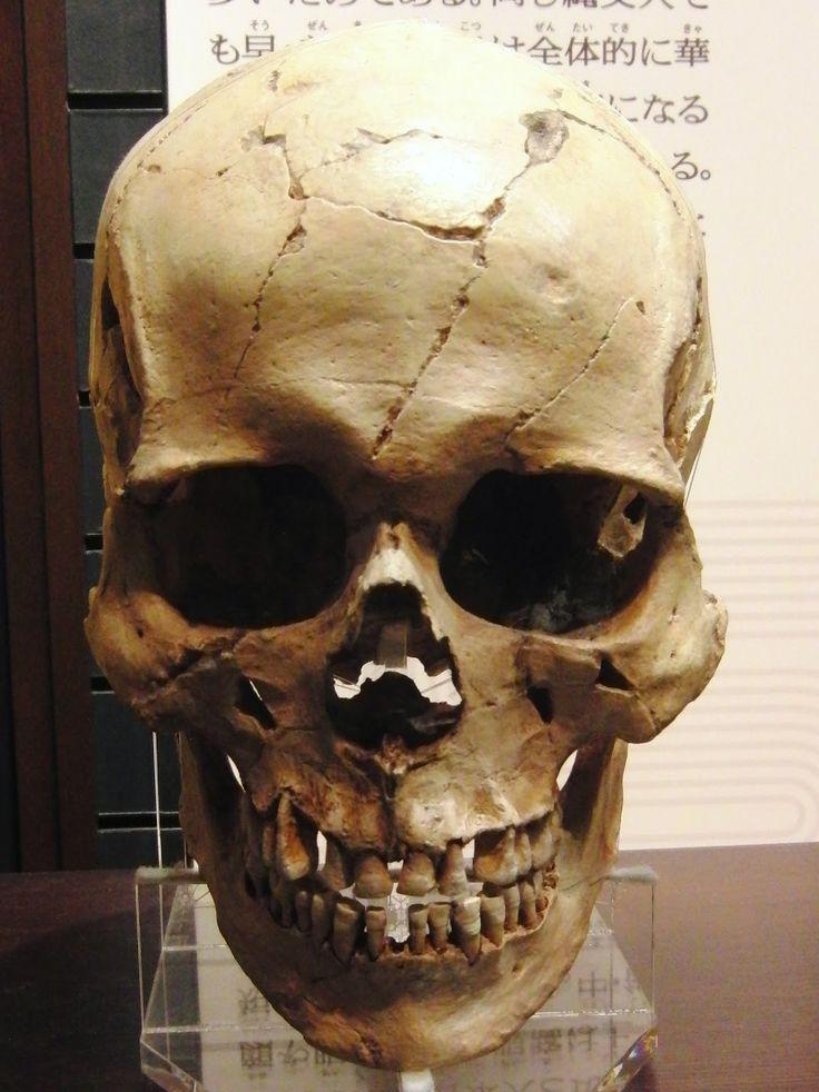best 20+ human skull anatomy ideas on pinterest | skull anatomy, Skeleton