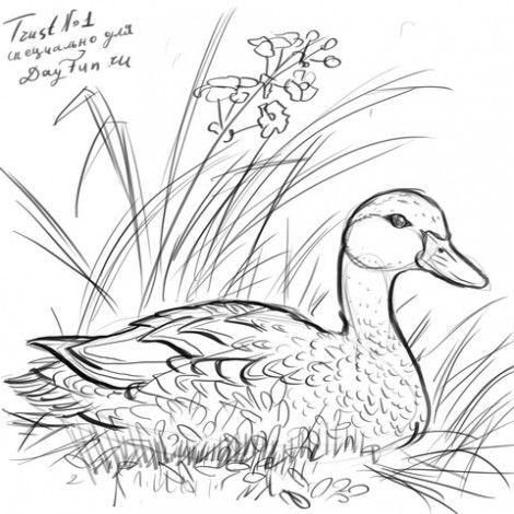 Как нарисовать птиц и зверей поэтапно очень много уроков. Полезный сайт.