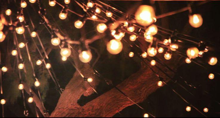 Light bulbs hangings from the trees creating a fairytale scenery ! :)