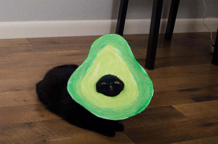 avocado cat halloween costume