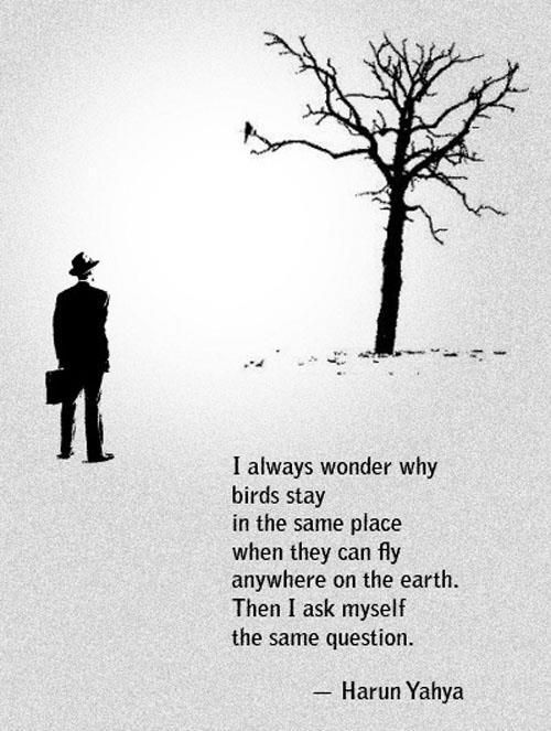 I always wonder why birds stay in the same place when they can fly anywhere on the earth. Then I ask myself the same question. -Harun Yahya