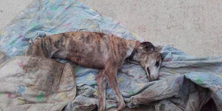 Unos desconocidos matan tres perros y torturan a otros 17 en un refugio