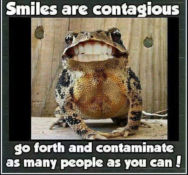 Cute Frog Quotes: 147 Best Images About HUMOR