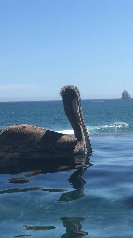 The Cape - Cabo
