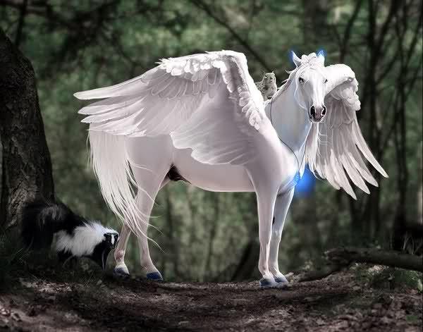 Immagini di cavalli alati e unicorni cerca con google - Immagini di pony gratis da stampare ...