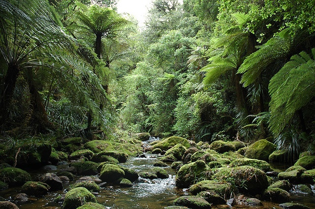 Kaimai Mamaku Forest Park, Bay of Plenty, New Zealand