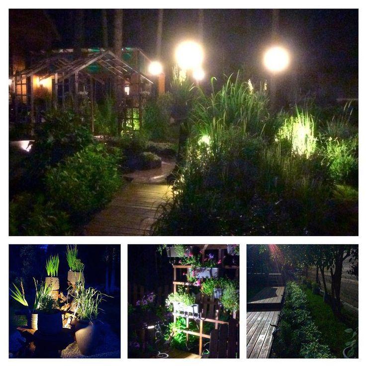 Я очень люблю свой ночной сад...#ландшафтный дизайн#сад