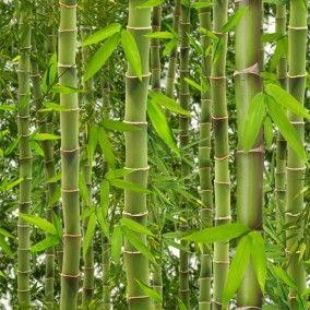 Bamboe behang bij Behangwebshop