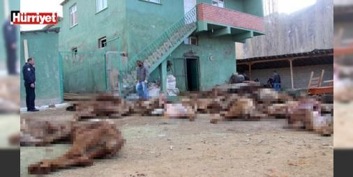 Çobanın aç susuz bıraktığı 20 büyükbaş hayvan telef oldu: Erzurum'un Tortum ilçesinde çobanın 15 gündür aç susuz bıraktığı 20 büyükbaş hayvan telef oldu. Telef olan hayvanları gören vatandaşlar, korkunç manzarayla karşılaşınca duruma tepki gösterdi. Gıda Tarım ve Hayvancılık İlçe Müdürlüğü ekiplerince bölgede ilaçlama çalışması yapıldı.